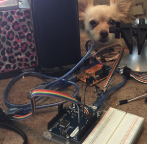 Chihuahua and electronics